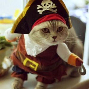 Funny Cat Halloween Costume - PetCareSunday