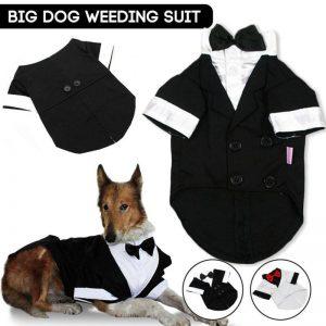 Big Dog Wedding Suit - PetCareSunday